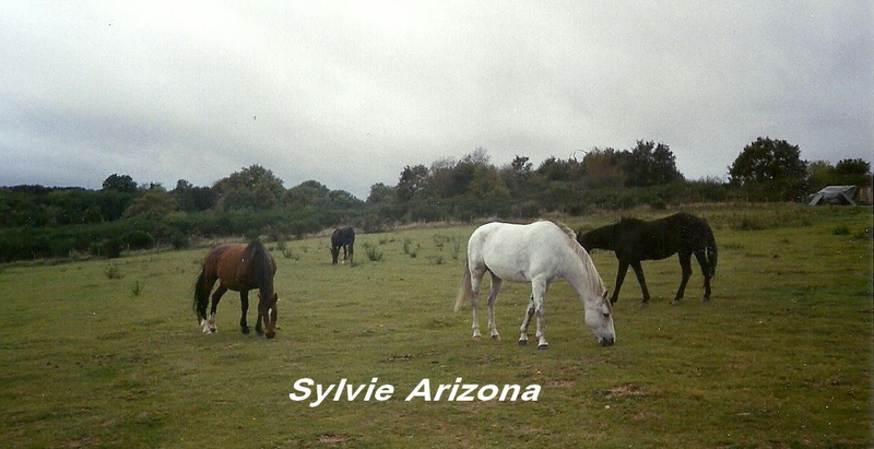 chevaux sylvie arizona