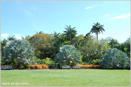 3_palmiers