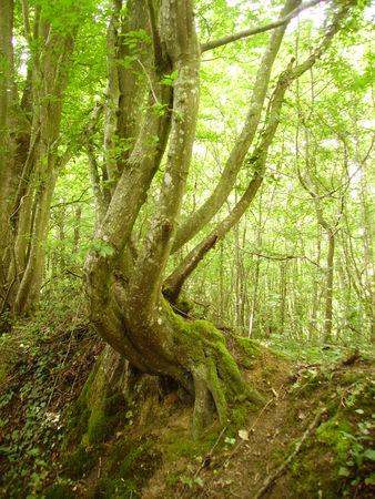 arbres_001