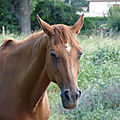 ♥ pour les amoureux des chevaux (6) ♥