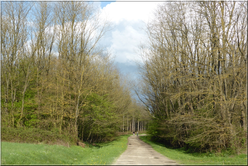 Geocaching foret d'Orleans (24)