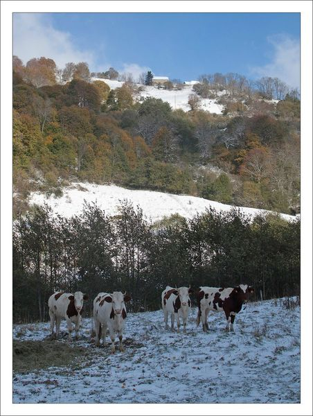 Sancy vallee vaches paysage neige 281012