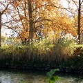 Automne sur le canal.