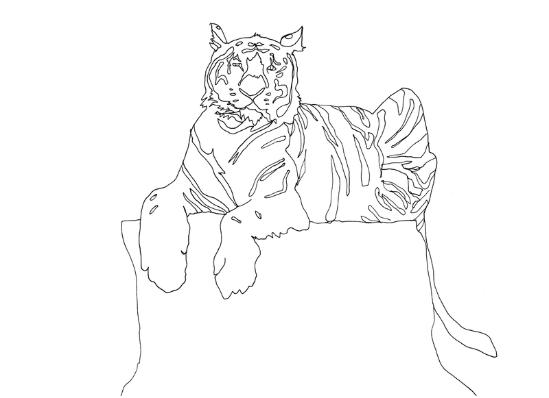 tiger-for-coloring