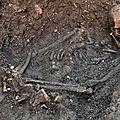 Archéologie : découverte du squelette de richard iii, dernier roi de la dynastie des plantagenêts