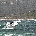 RELANCE_BACK_WIND_SURF__ROGER_S__SPOT__TUNARA_