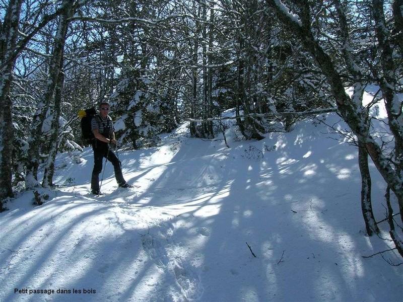 bois_neige
