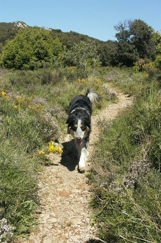 Lilly au pic Saint-Loup