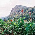 d-img012-fleur-rouge