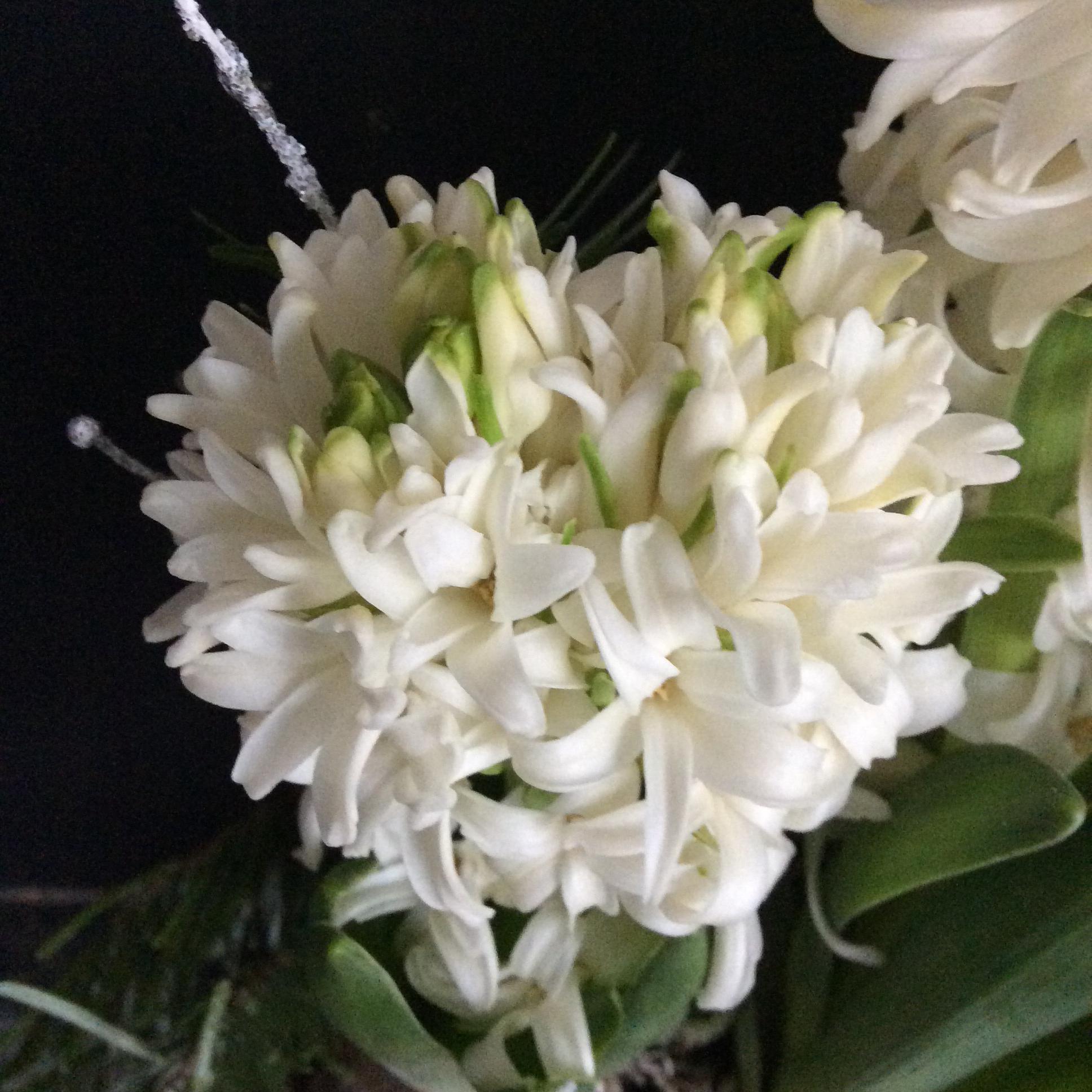 Le bouquet du vendredi....