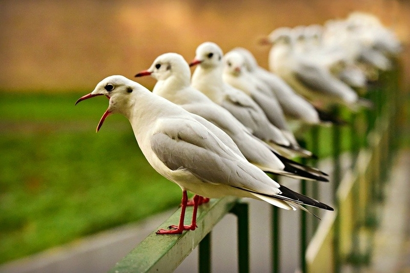 mouettes - seagull-3807371_960_720