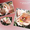 tulipes 2015_03_31
