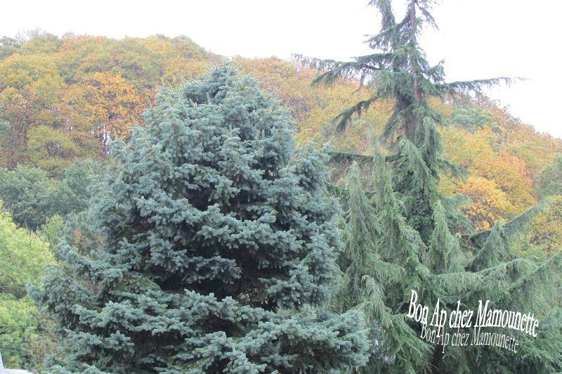 Automne et ses couleurs octobre 001