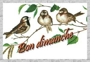 bon dimanche oiseaux