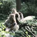Petits singes du parc de Zhangjiajie
