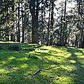 Plateau de sapins à Ichèus.