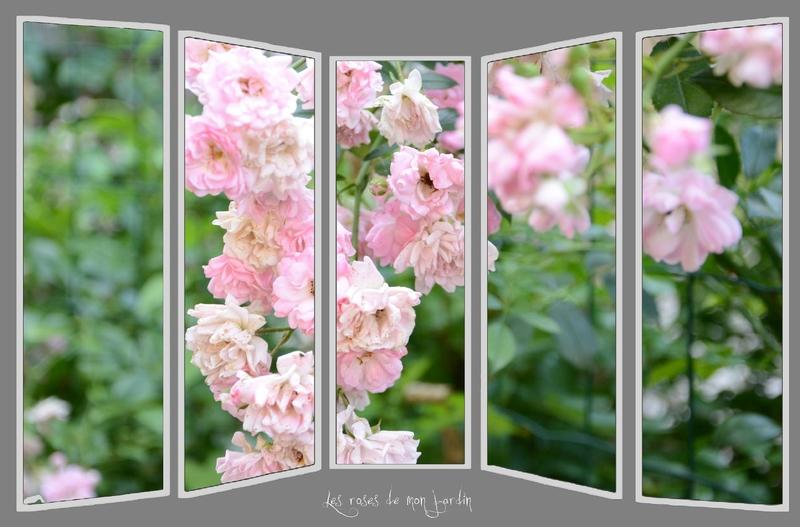 montage roses du jardin3