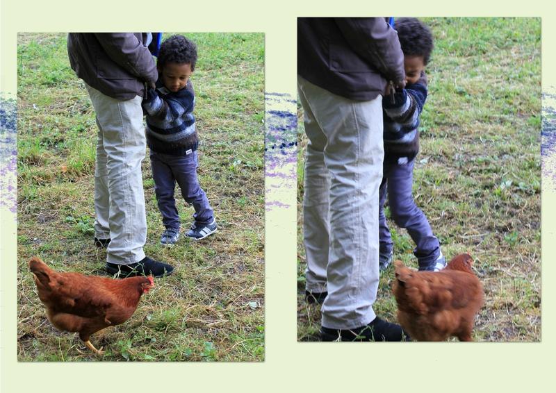 alis et les poules