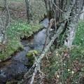 2008 04 20 Un ruisseau qui rejoint le Lignon