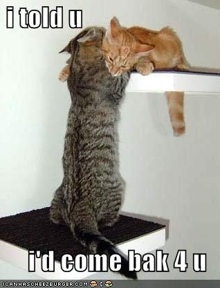 funny_pictures_cat_has_come_back_for_his_love