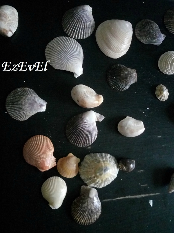 souvenir coquillage 2 EzEvEl