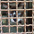 chats encagés 3