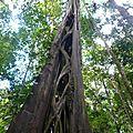sentier_gros_arbres_vue