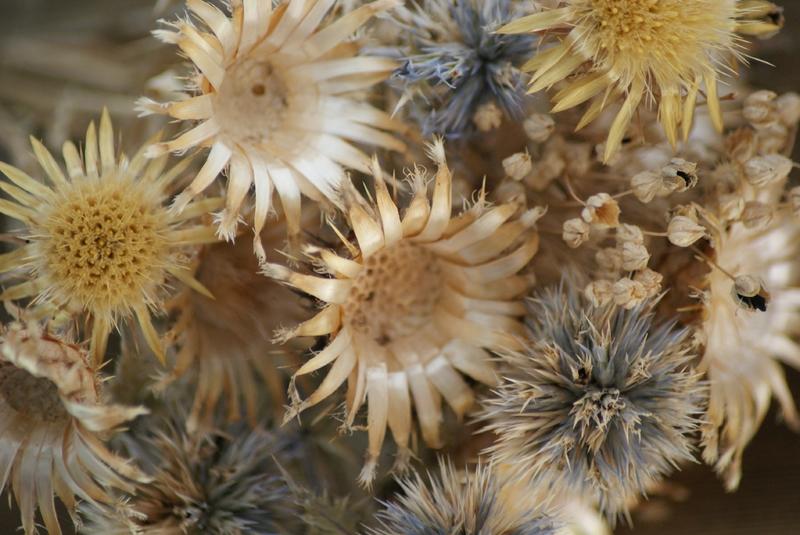 fleur séchée 22