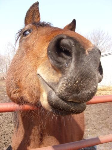 FUNNY HORSES (26)