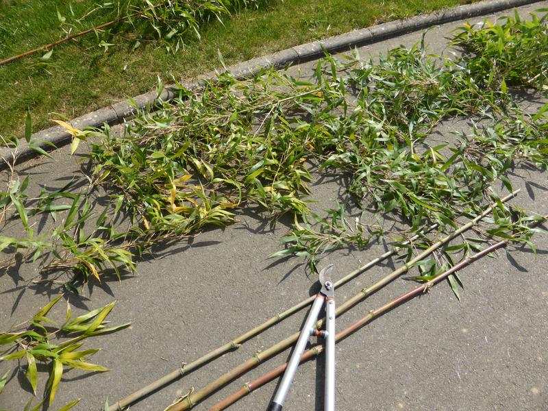 24-bambous (4)