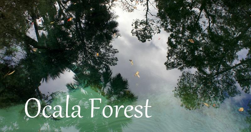 ocala-forest-clara-circus1