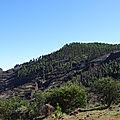 Pins canariens, montagnes, île de gran canaria.