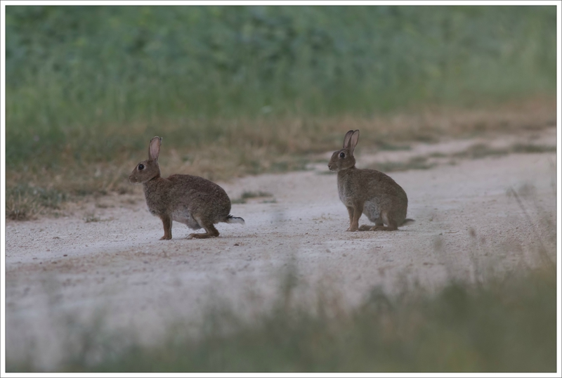 plaine lapins calins 8 110715