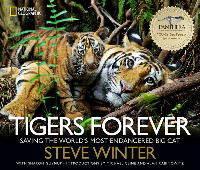 STEVE WINTER TIGERS FOREVER