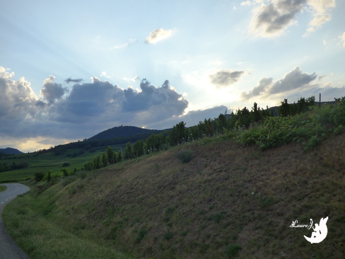 nuage chat Alsace2