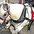 Nogent-le-républicain le 16 mars 1795 : restitutions d'armes et réformes de chevaux de poste.