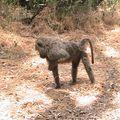 2010-02-23 Samburu (108)