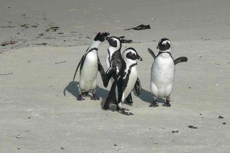 charlie_yoyo_pingouins_3