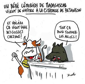 citadelle_zoo_bebe_lemurien
