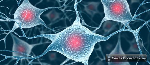 une-proteine-de-l-oubli-a-l-origine-des-troubles-de-la-memoire_l