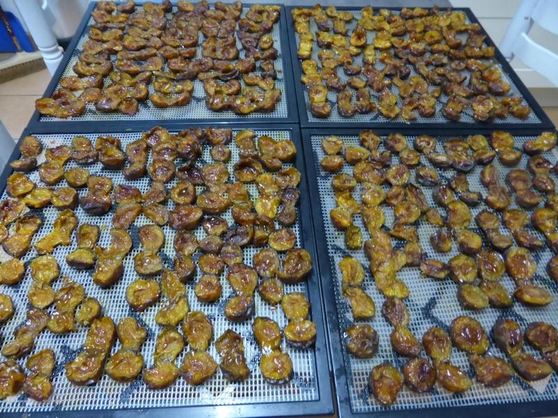16-prunes séchées (8)