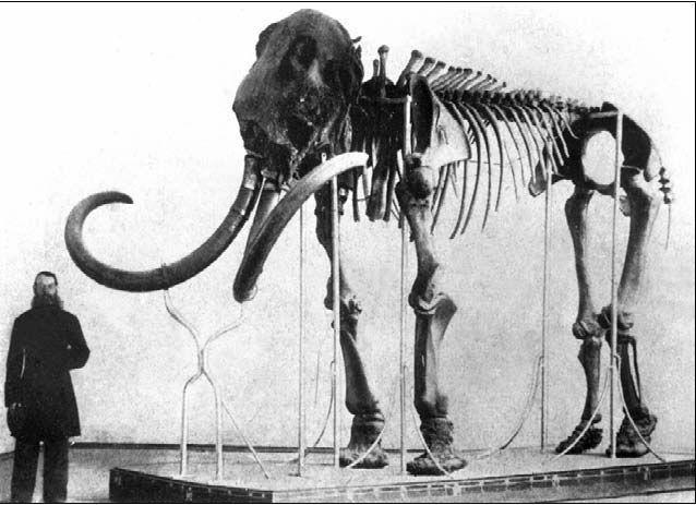 adams mammouth Talcy-30_img_59