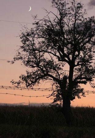 Mon arbre 3