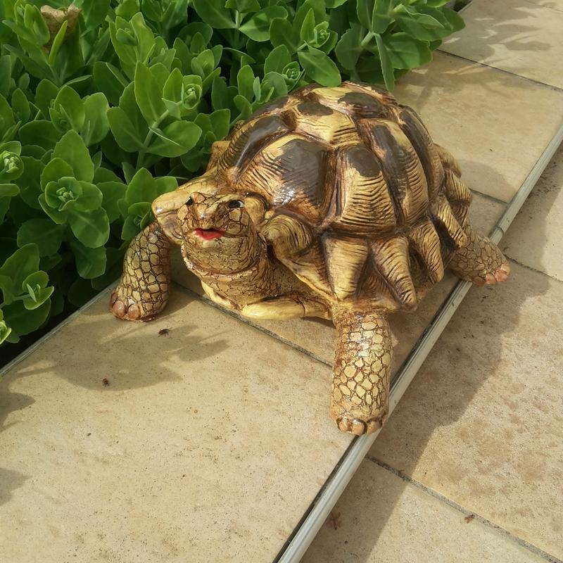 Caroline la tortue