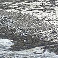 Saint-pol de léon - les bécasseaux