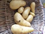 27-pommes de terre, pommes de terre nouvelles (3)