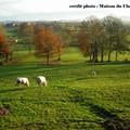 paysage charolais 6