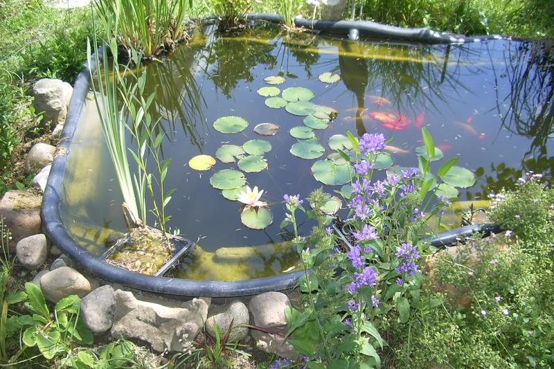 Jardin 2016-06-08 10-19-33_0188