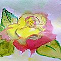 Rose watercolour - aquarelle