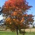 automne051